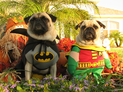 Earth-39 is going to be nothing but adorable Halloween costumes for dogs and babies.